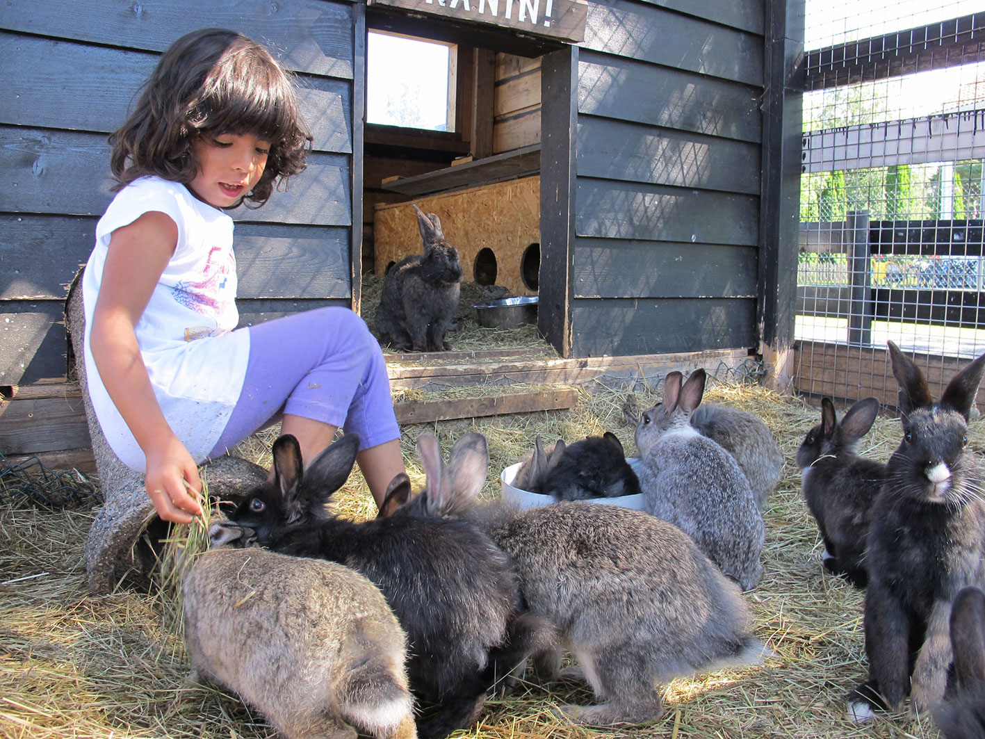 Feeding of rabbits