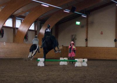 Hoppende hester i elegant samspill