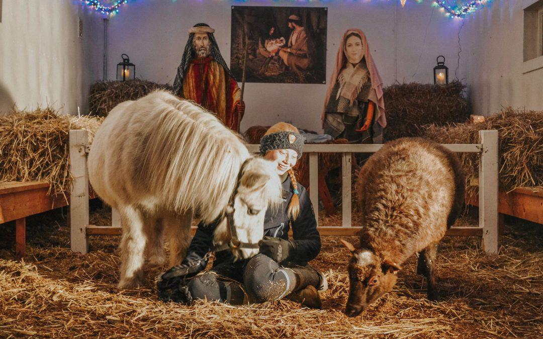 Besøk vår julekrybbe i 1:1