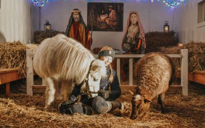 Visit our Christmas Crib in 1: 1