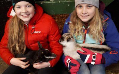 Høstferie med dagskurs for barn med hest og husdyr