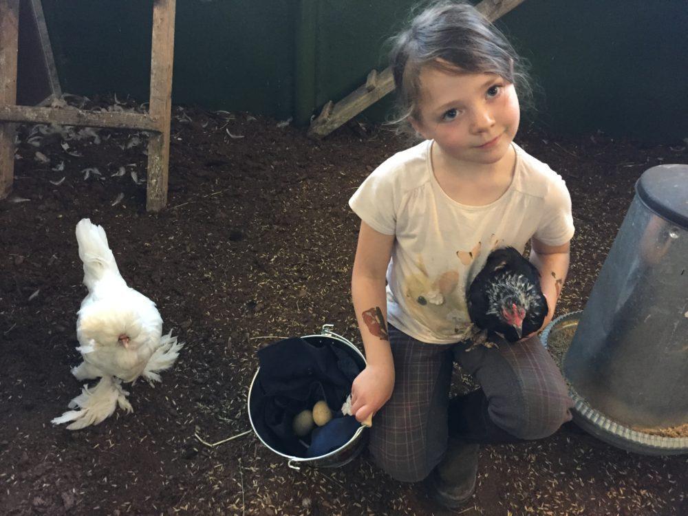 13448a69e07 Barn og voksne får lære mer om hvordan hønene legger egg og ruger frem  kyllinger før vi legger egg i rugemaskinen.