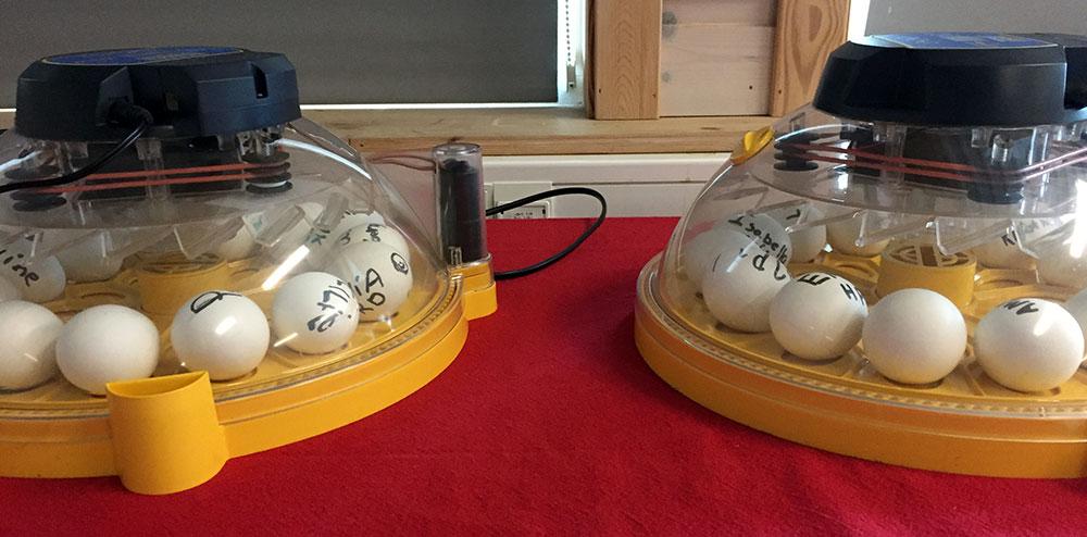 Rugemaskiner med egg side ved side