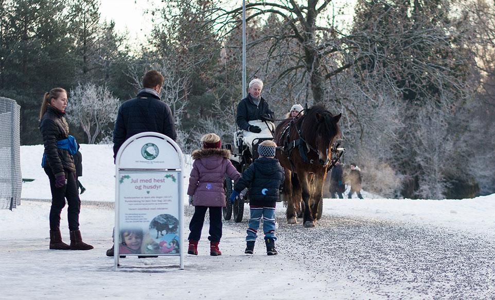 Kjøring med hest og vogn