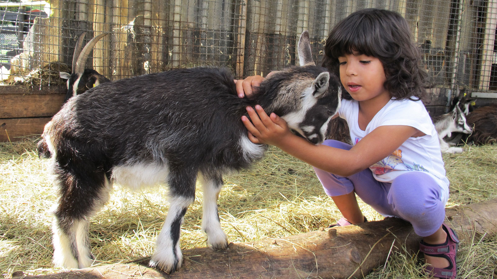 This is how you can experience the animals in the Zoo
