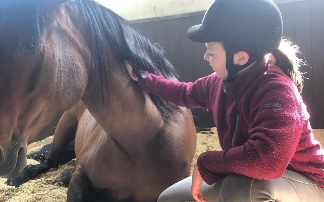 Sommerens tilbud med hest og husdyr